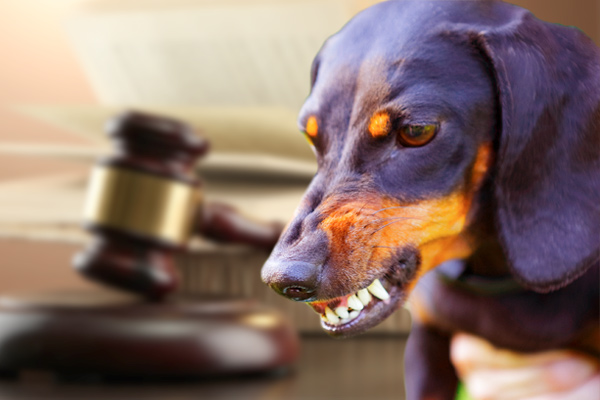 Dog Bite Lawyers near Me